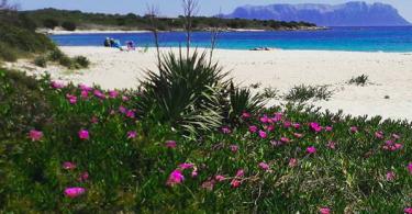 spiaggia fiorita