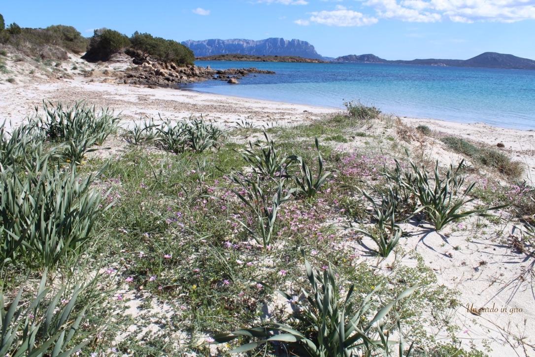 spiaggia piccola