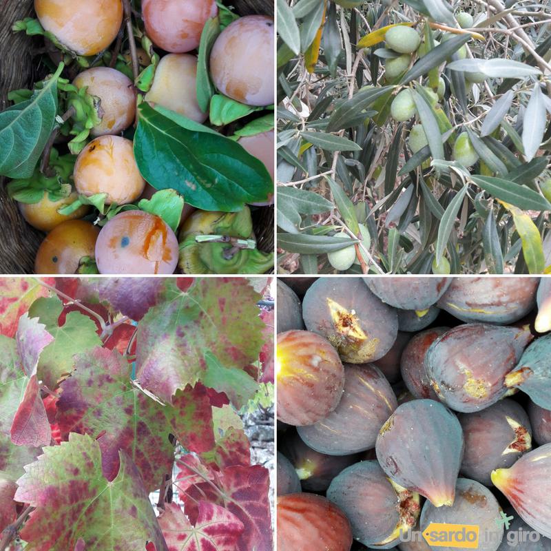 frutti autunno
