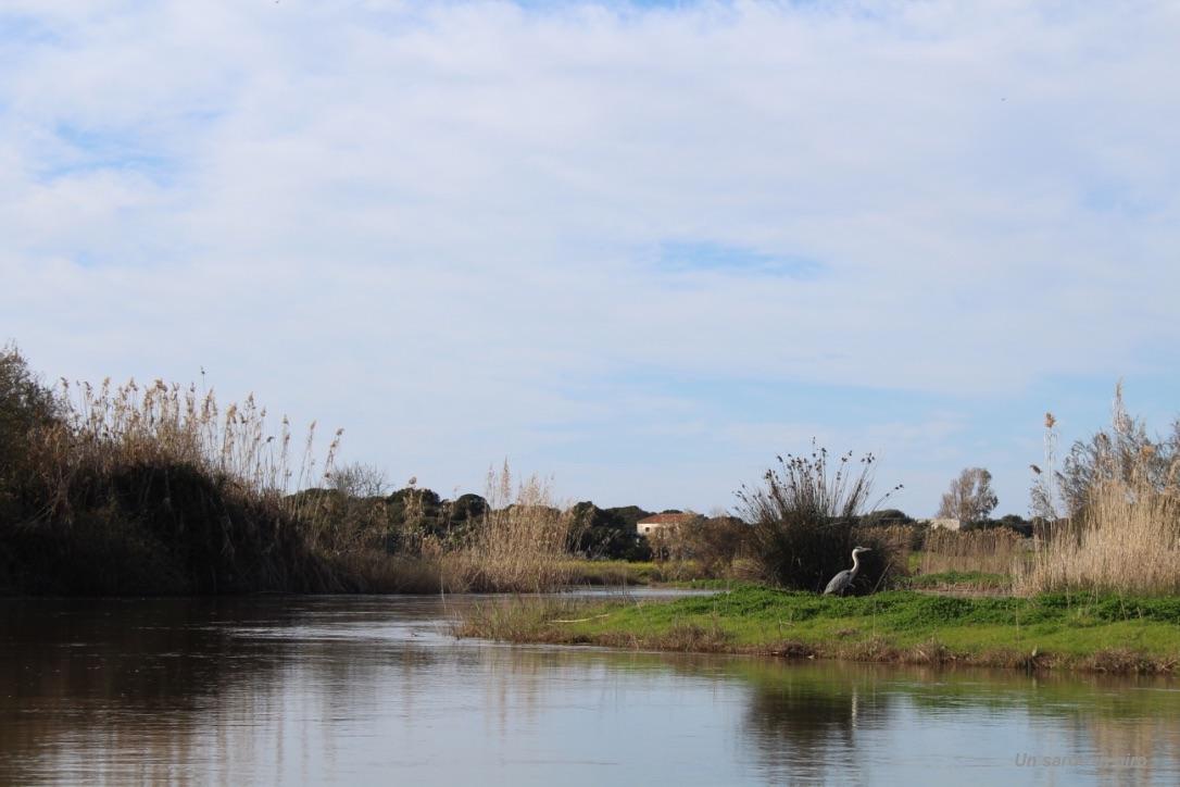 airone sul fiume