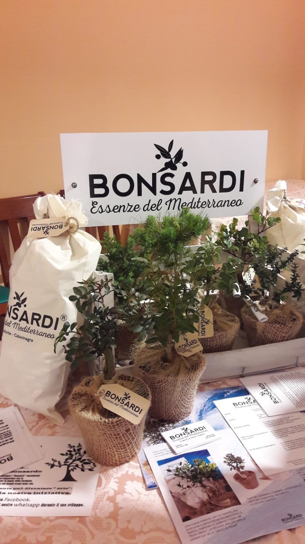 bonsardi