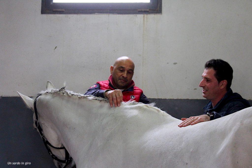 preparazione cavalli