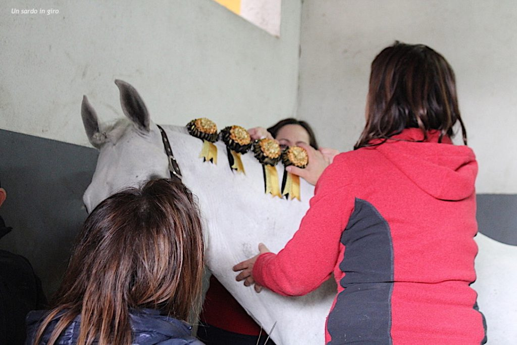 preparazione cavallo