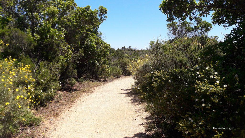 sentiero spiaggia
